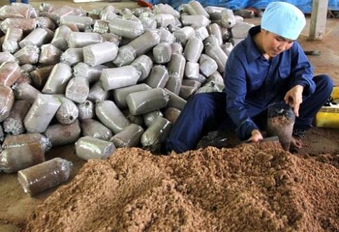 đóng bịch nguyên liệu trong trồng nấm linh chi trên bã mía