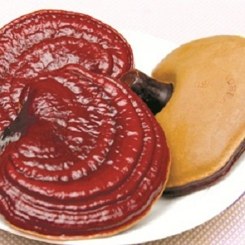 nấm linh chi đỏ dạng khay