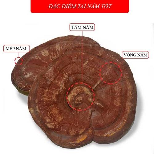 nam-linh-chi-han-quoc-loai-thuong-hang_4
